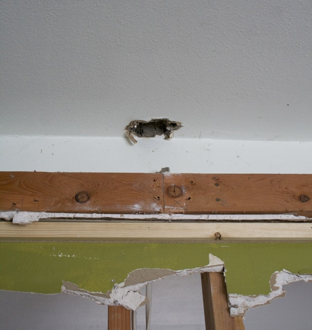 mice in ceiling